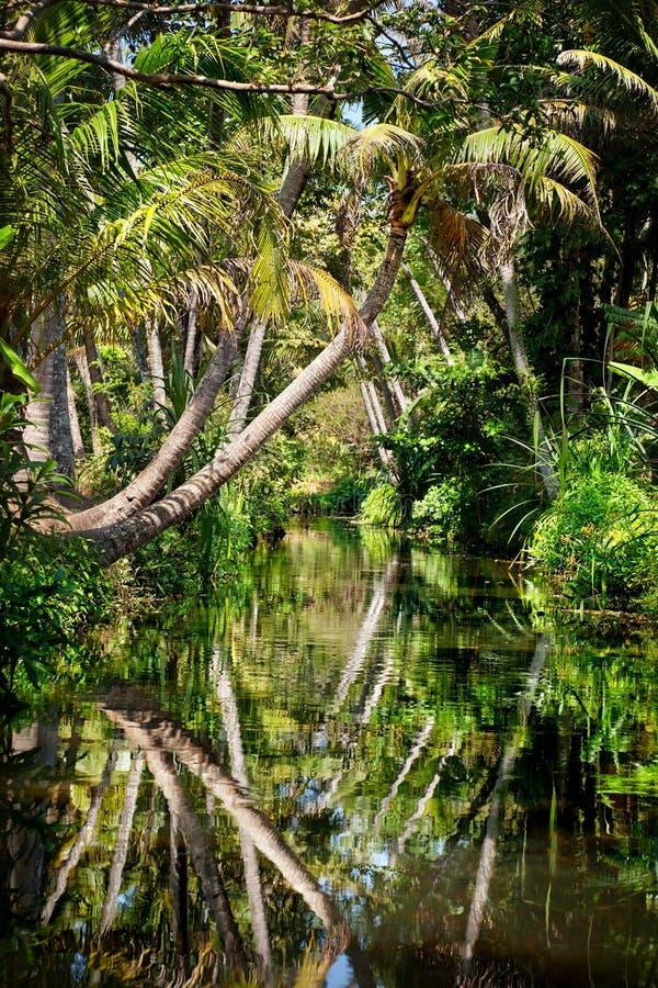 Binnenwater in wildernis stock afbeeldingen