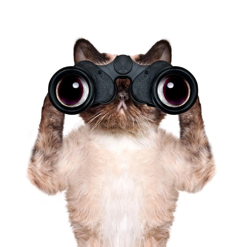 Binoculars cat searching, looking and observing with care. Isolated on white royalty free stock photos