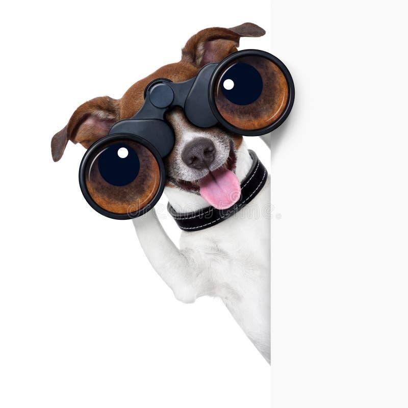 Binoculars dog stock image
