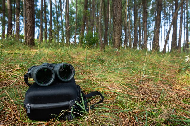 Binoculars in a pineforest stock photos