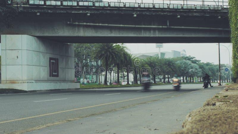 Bintaro gatafluga över arkivfoton