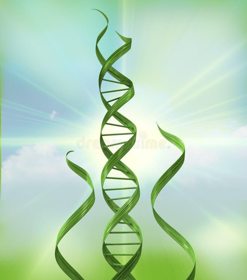 Bio ADN d'essence illustration libre de droits