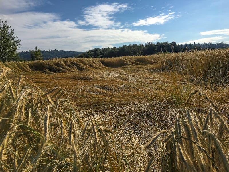 Bio- compitato con danno del vento fotografia stock