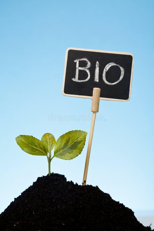 Bio- concetto con una pianta in suolo immagine stock libera da diritti