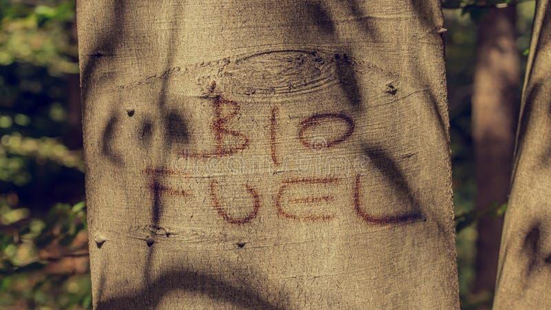 Bio- concetto del combustibile fotografie stock libere da diritti
