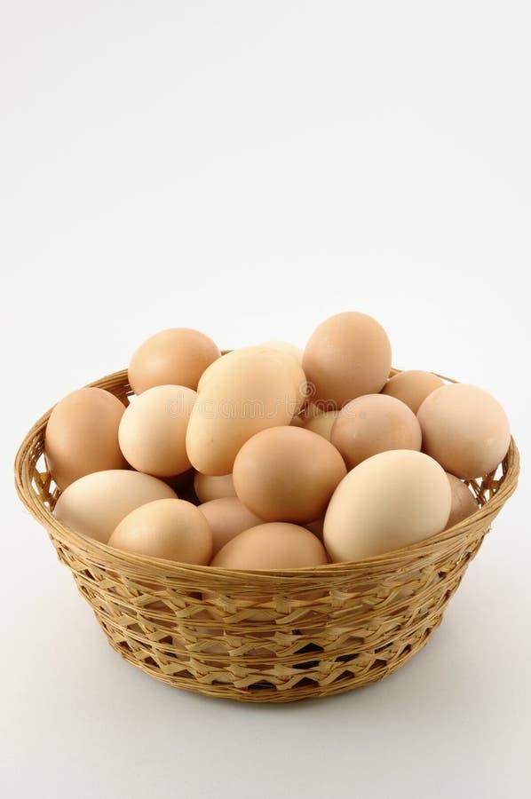 bio eggs royalty free stock image
