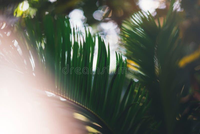 Bio falta de definición sana fresca del fondo natural con el follaje borroso extracto y el contexto brillante en el parque, poli  fotografía de archivo