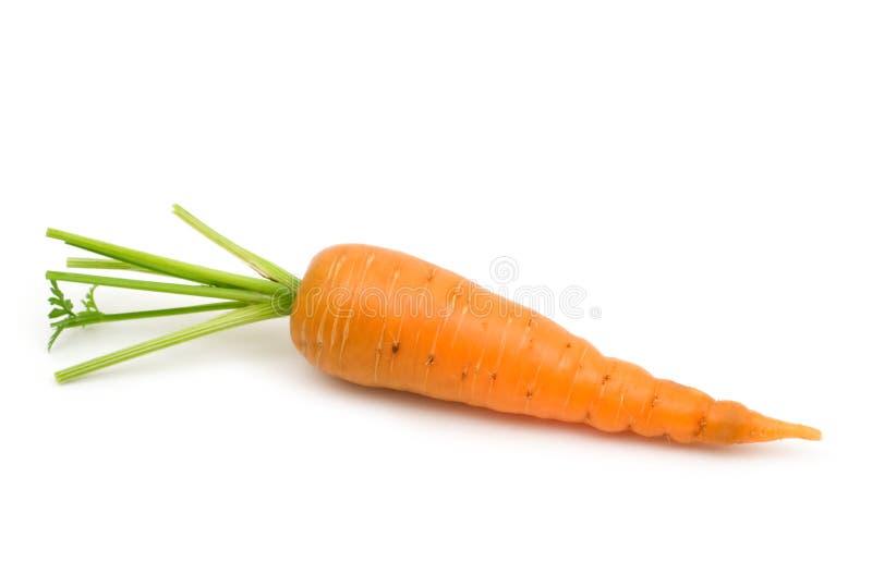 Bio fresh carrot royalty free stock image
