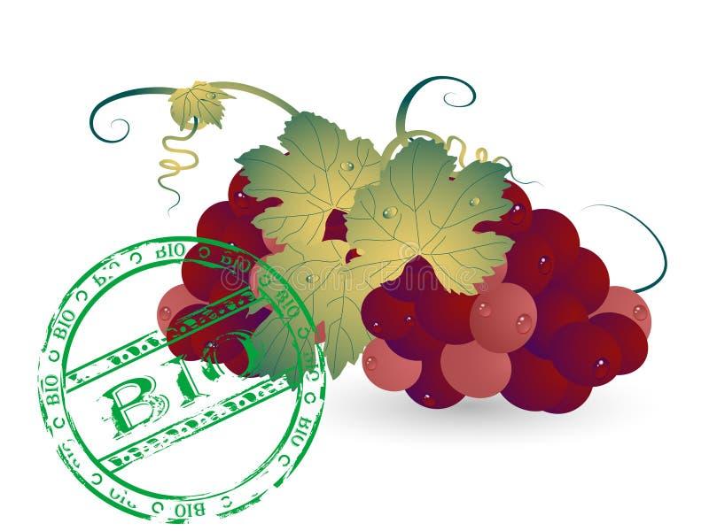 Download Bio grapes stock vector. Illustration of classic, grapevine - 20150561