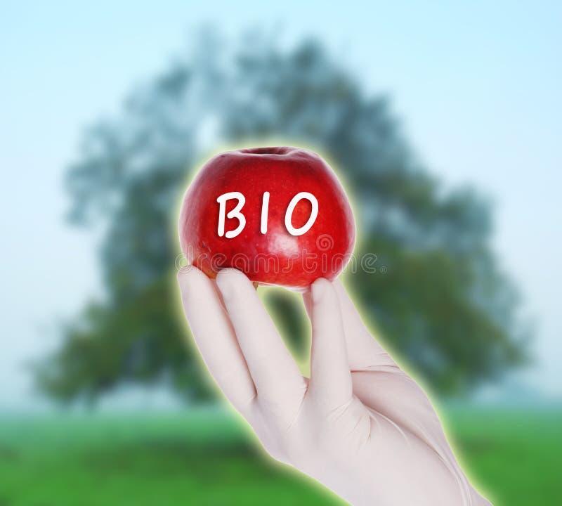 Bio- mela rossa fotografia stock libera da diritti
