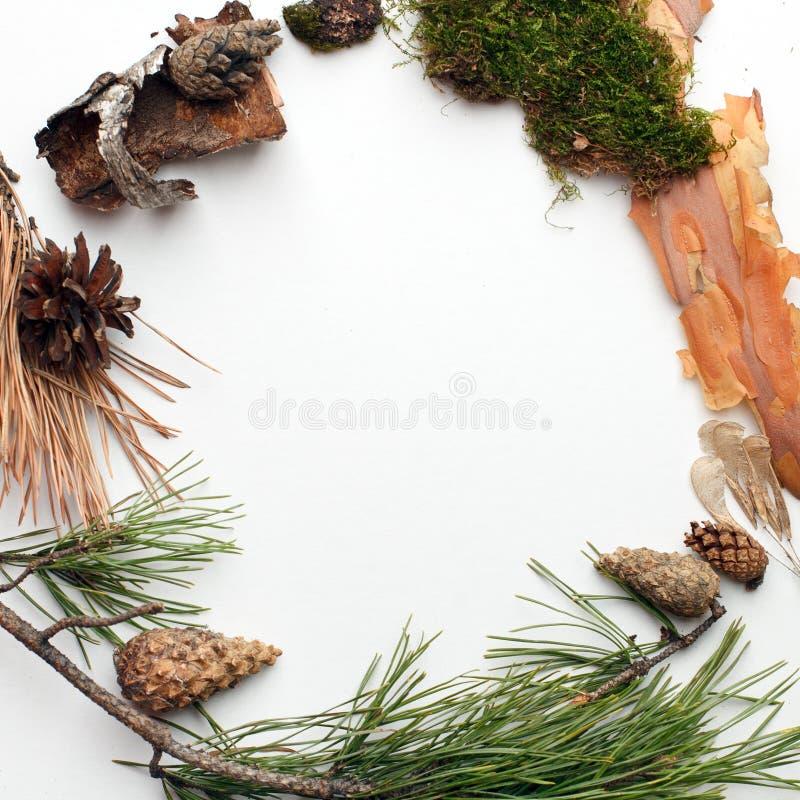 Bio- organicframe naturale dai deteails della foresta su fondo bianco, ecologico, ecologia, idea creativa di giorno di terra, spa immagine stock libera da diritti