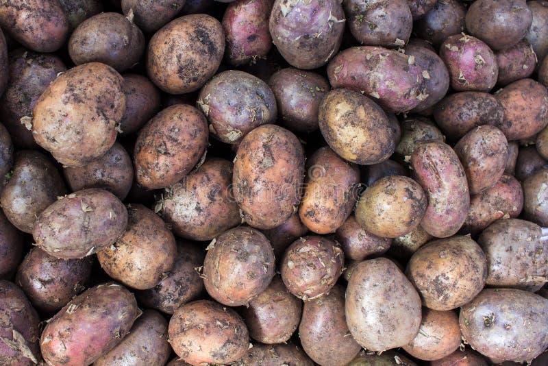 Bio patatas no tratadas en venta en un mercado de los granjeros foto de archivo libre de regalías