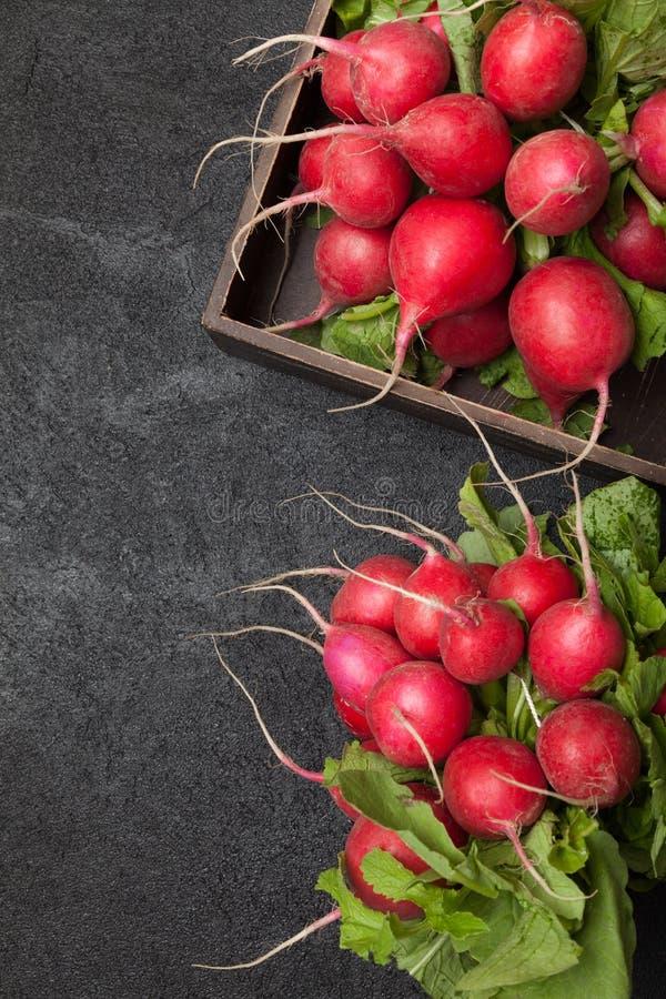 Bio- pianta di ravanello rosso del mazzo, fine di agricoltura su fotografia stock libera da diritti