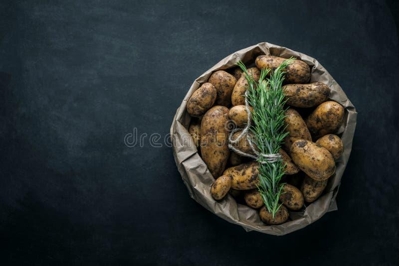Bio pommes de terre fraîches sur le plan rapproché gris de fond photos libres de droits