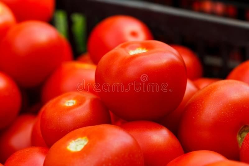 Bio Tomatoes. Healthy bio tomatoes ready for sale royalty free stock images