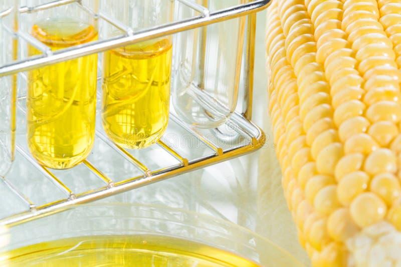 Biobränsle- eller havresirapsweetcorn fotografering för bildbyråer