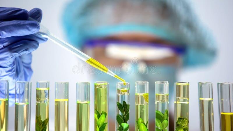 Biochemicus die gele substantie druipen in reageerbuis met groene installatie, extractie stock fotografie