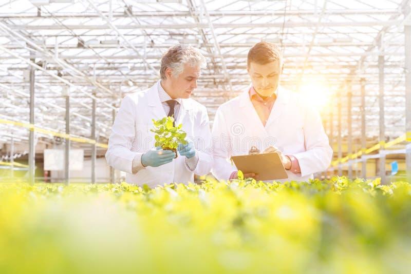 Biochimici maschili maturi che discutono sugli appunti mentre si trovano in un vivaio di piante fotografie stock