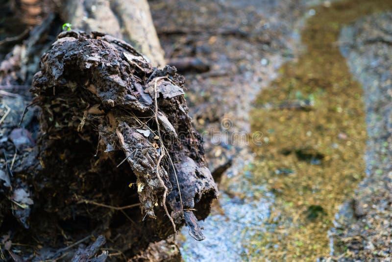 Biodegradação de madeira fotos de stock
