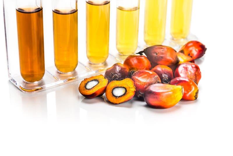Biodiesel do combustível biológico da palma de óleo com os tubos de ensaio no fundo branco fotos de stock