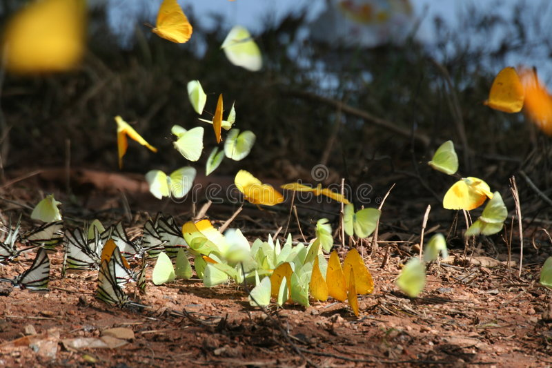 Biodiversidad 2 foto de archivo libre de regalías