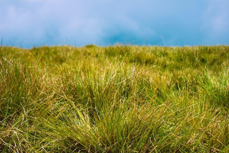 Biodiversidad de Horton Plains National Park, Sri Lanka fotos de archivo libres de regalías
