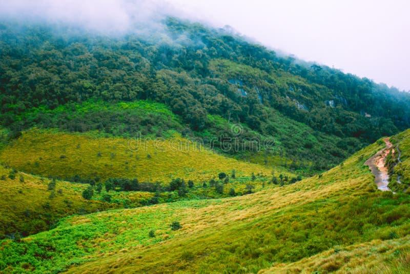 Biodiversidad de Horton Plains National Park, Sri Lanka imagen de archivo libre de regalías