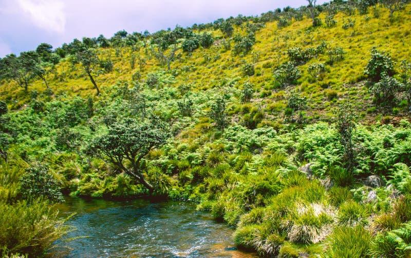 Biodiversiteit van Horton Plains National Park, Sri Lanka stock afbeelding