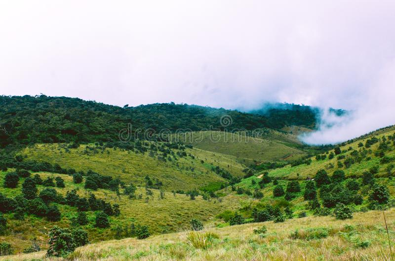 Biodiversiteit van Horton Plains National Park, Sri Lanka royalty-vrije stock foto