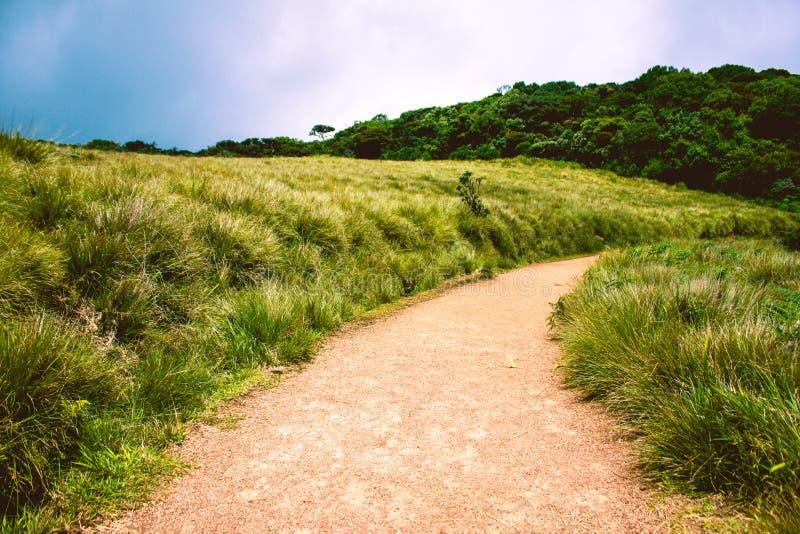 Biodiversiteit van Horton Plains National Park, Sri Lanka stock foto