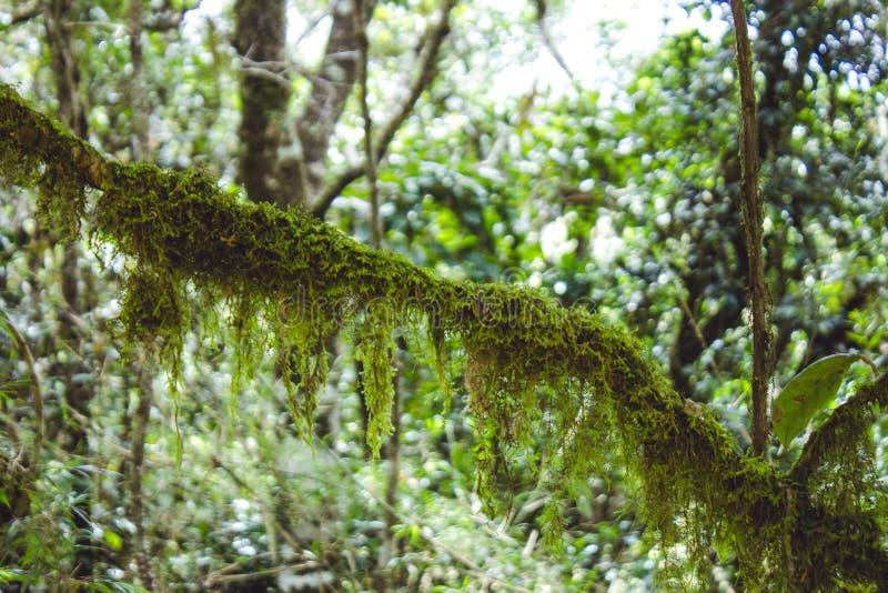 Biodiversiteit van Horton Plains National Park, Sri Lanka stock fotografie