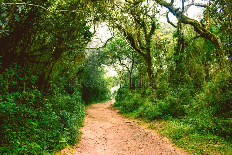 Biodiversiteit van Horton Plains National Park, Sri Lanka royalty-vrije stock fotografie