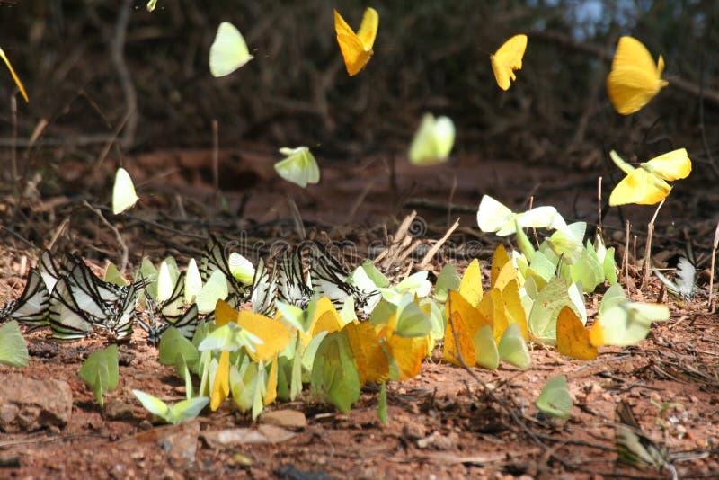 Biodiversity 3 royalty free stock photography