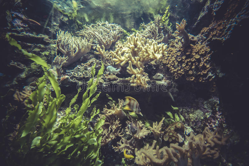 Biodiversity, small coral reef ecosystem royalty free stock photos