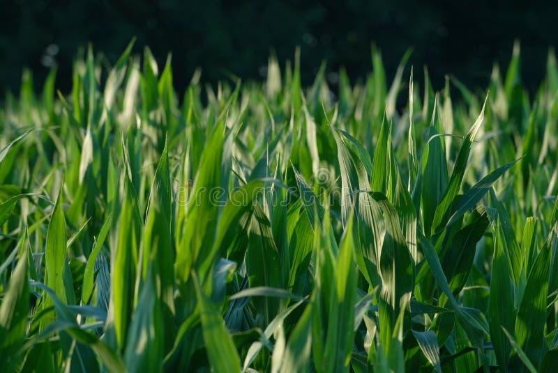 Bioenergia fotografia stock libera da diritti