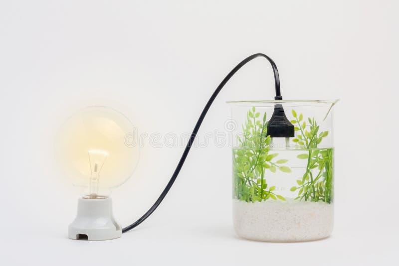 Bioenergie stockfoto