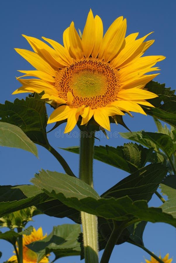 Bioenergie, bitte lizenzfreie stockfotos