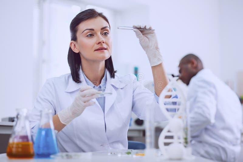 Bioengineer féminin heureux faisant un essai avec des graines image stock