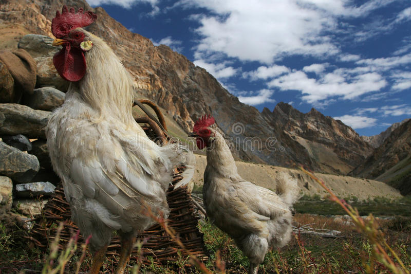 Download Biofarming stock image. Image of mountain, poultry, agriculture - 15126749