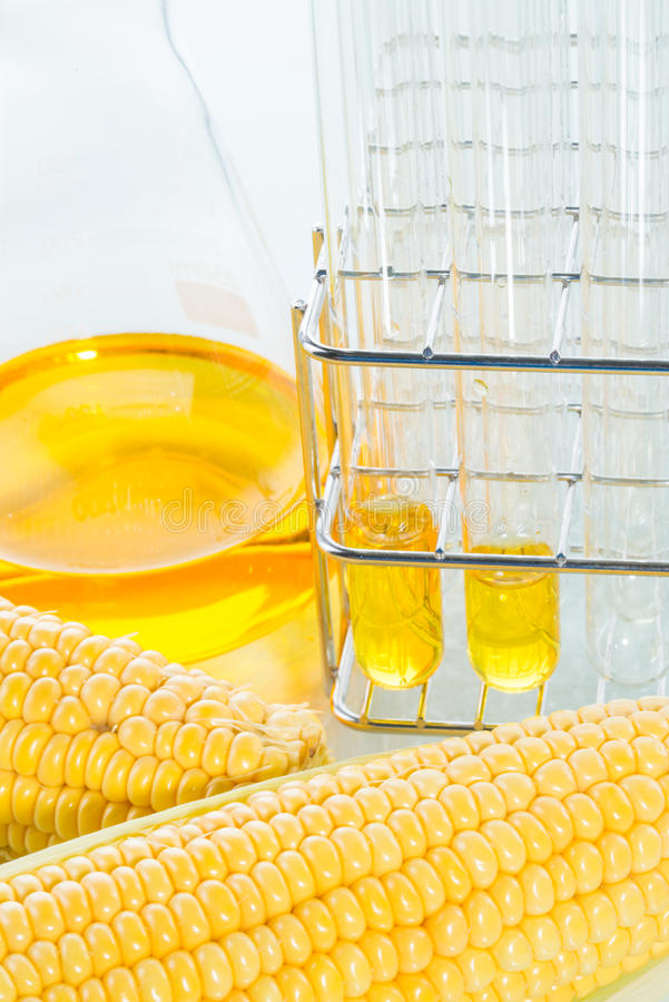 Biofuel or Corn Syrup sweetcorn. Biofuel or Corn Syrup, gasoline, energy, environmentalist stock photos