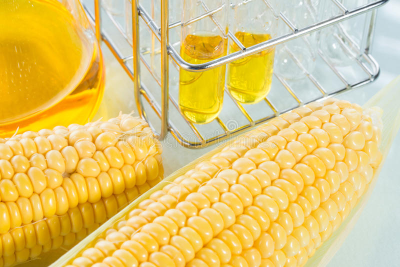 Biofuel or Corn Syrup sweetcorn. Biofuel or Corn Syrup, gasoline, energy, environmentalist royalty free stock image