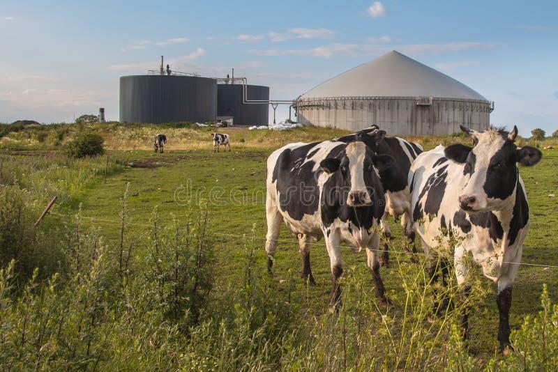 Biogas roślina z krowami zdjęcie royalty free