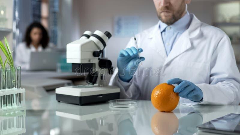 Biolożki narządzania strzykawka dla wstrzykiwać pomarańcze, karmowy eksperyment, pestycydy obrazy royalty free