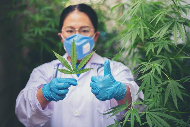 Biolodzy badają marihuanę obraz stock