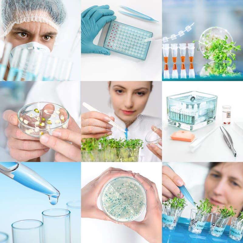 Biologia e trabalhadores da planta experimental no desgaste protetor fotos de stock royalty free