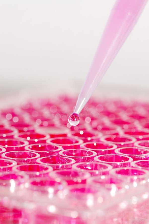 biologia eksperyment zdjęcie stock