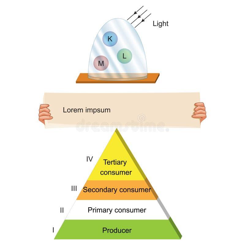 Biologia - piramide del ciclo alimentare illustrazione di stock