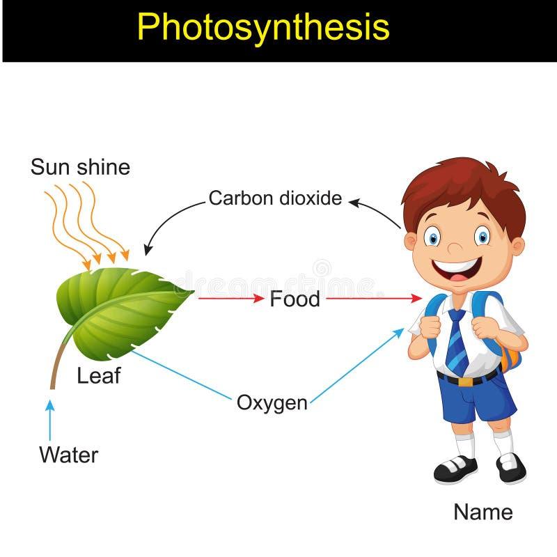 Biologia - versão 01 da modelagem da fotossíntese ilustração do vetor