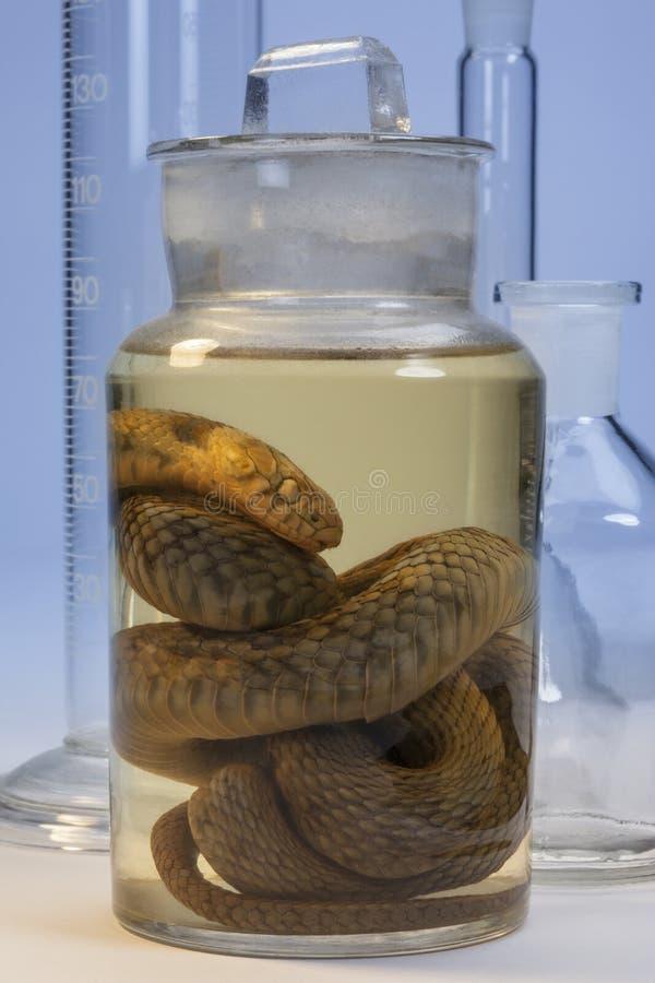 Download Biological Specimen - Snake Stock Photo - Image: 27994174
