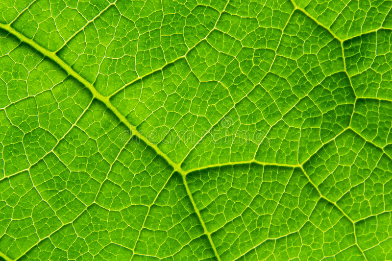 Download Biological Texture Of The Leaf Stock Image - Image: 24683219